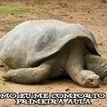 A tartaruga está sonhando com sua mãe Zzzzzz