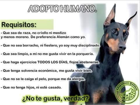 Molesta, no? Adopta, el tambien es un perro, igual de fiel que los demas! - meme