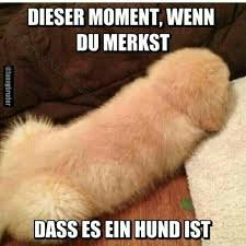 Cooler Hund. - meme