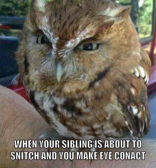 Snitching siblings - meme