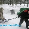Le chien est maître