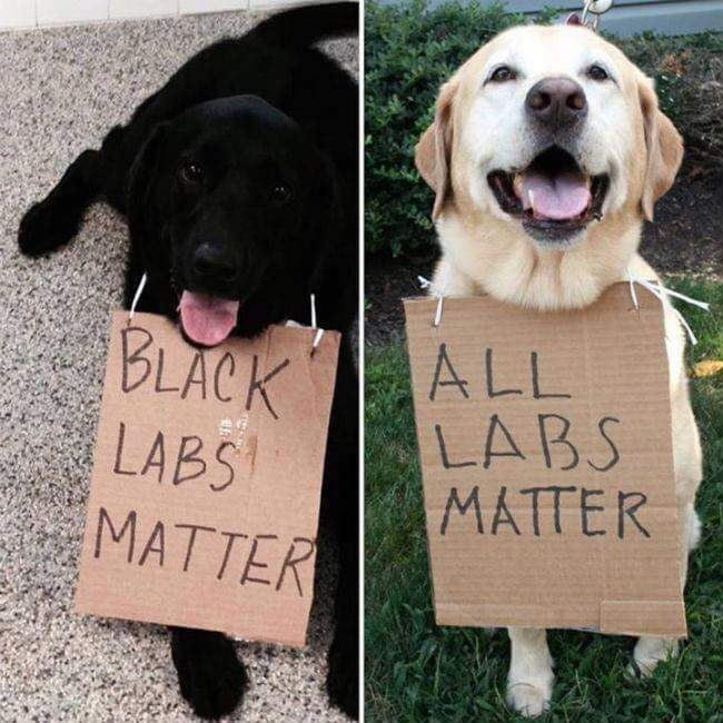 All labs matter! - meme