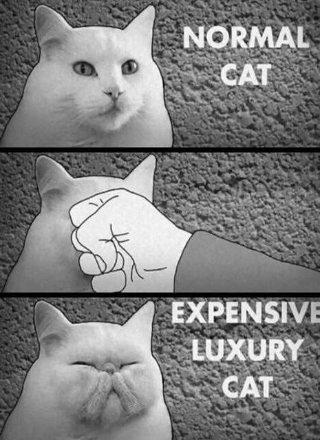 Fancy Cat - meme