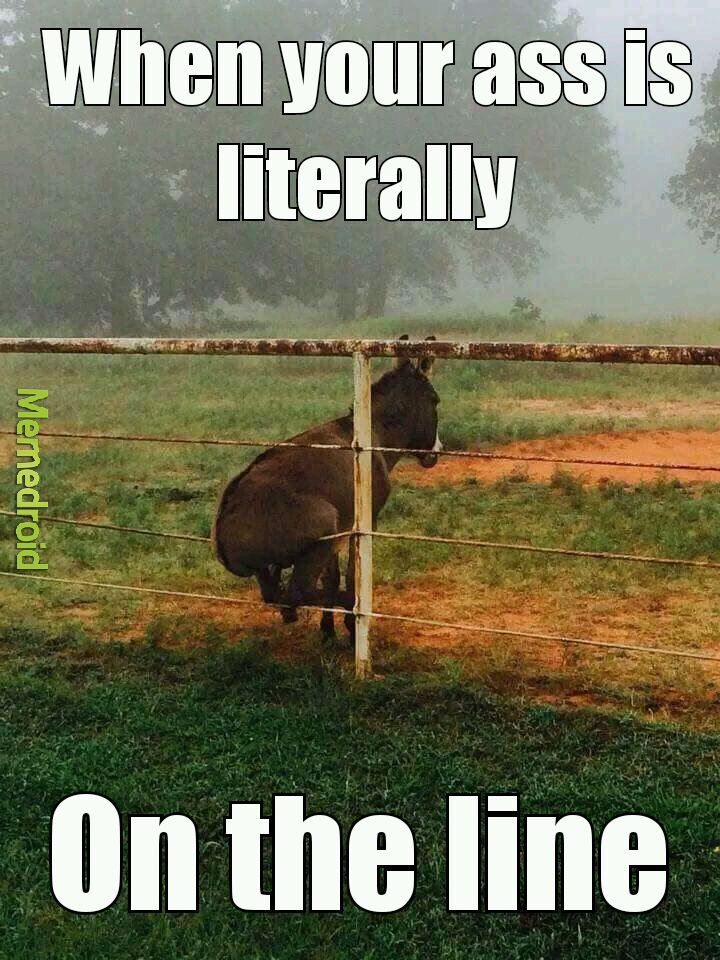 Donkey!!! (Shrek voice) - meme