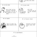 Les différentes personnes sur GTA