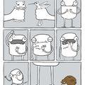 how the kiwi is born