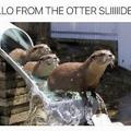 the ottter sliide