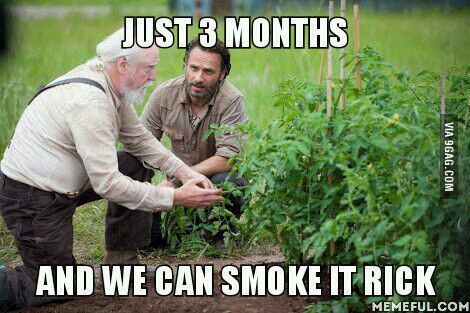 Rick loves the dank kush - meme