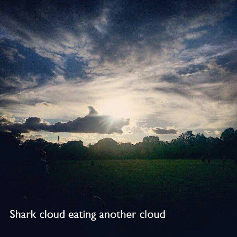 Shark Week anyone? - meme