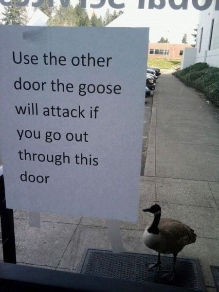 My kind of goose - meme