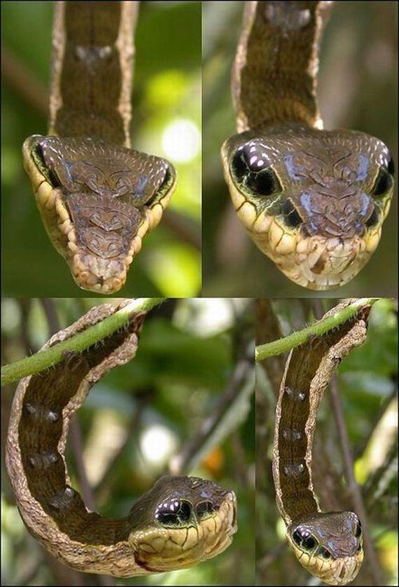 This is the weirdest caterpillar ever - meme