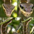 This is the weirdest caterpillar ever