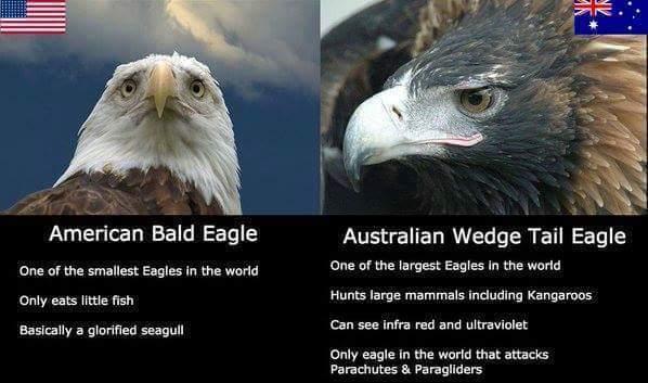 56a6b88fbdc9f australia day! meme by phantomaniac ) memedroid