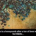 Bee happy bee unhealthy