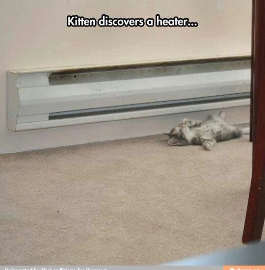 When a cat discover a heater - meme