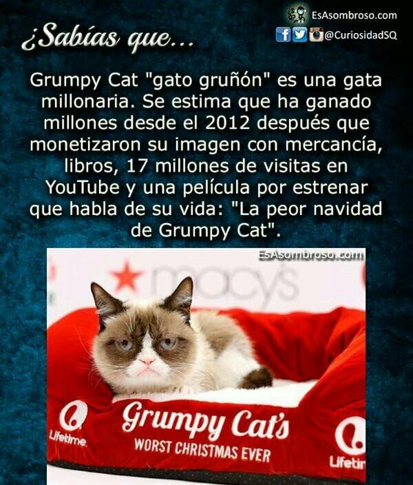 Grumpy es millonaria! :o - meme