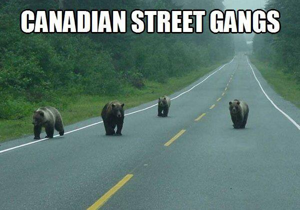 Attenction to bears in Canada - meme