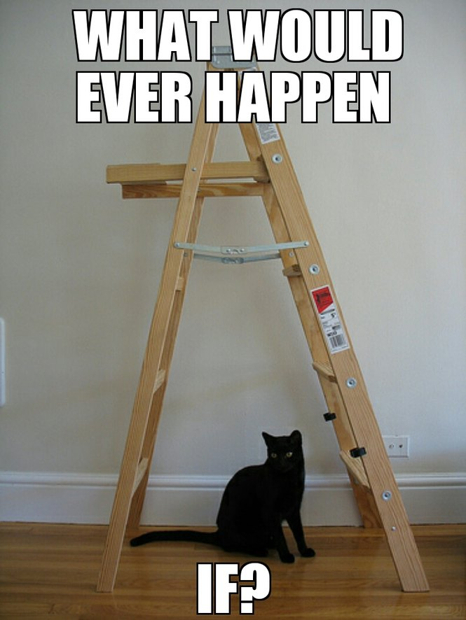 Unlucky unlucky cat... - meme