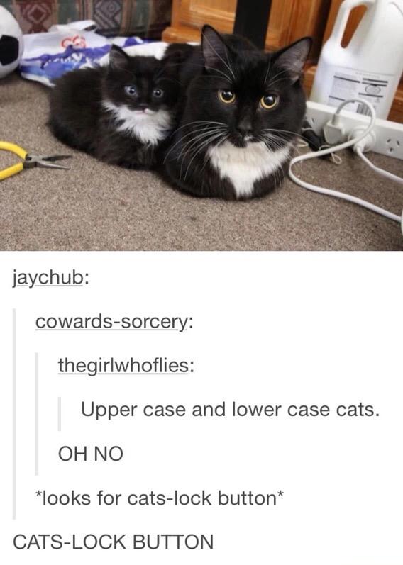 Cats-lock - meme