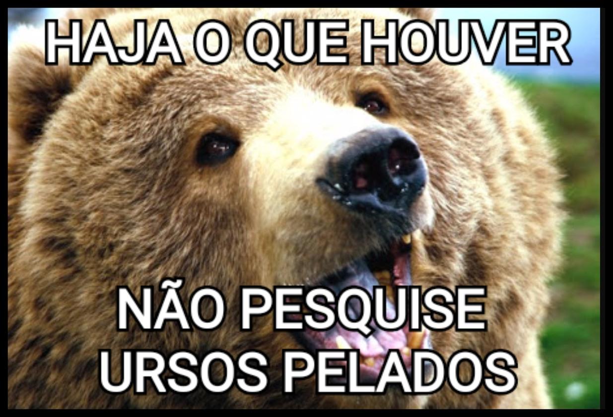 Ursos pelados > google - meme