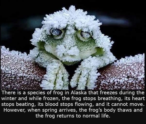 frog leg popscicles - meme