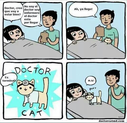 Doctor Cat - meme