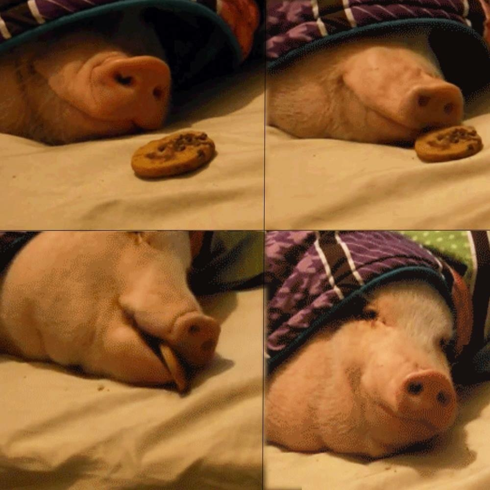 Pig in a blanket - meme