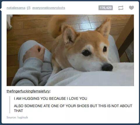 I want a Shiba Inu - meme