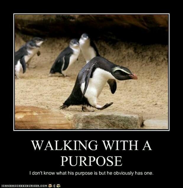 Penguin with purpose - meme