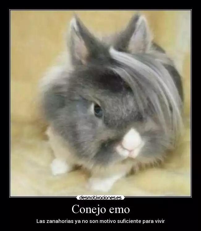 Los conejos tambien tienen sentimientos - meme