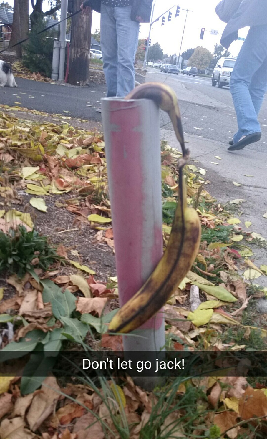 Bananas have a better love story than Me and Twilight combined - meme