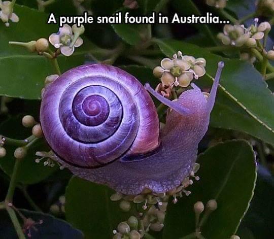 Snails - meme