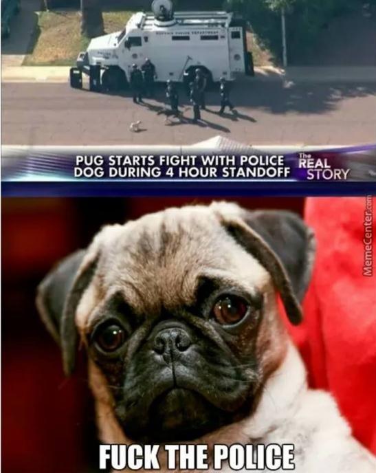 Pug life - meme