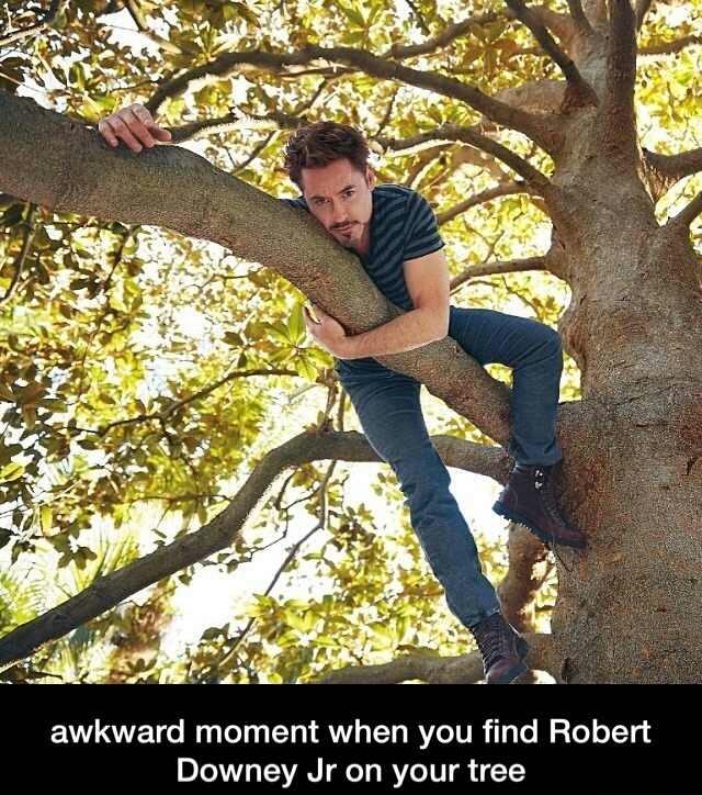 Damn it Robert - meme