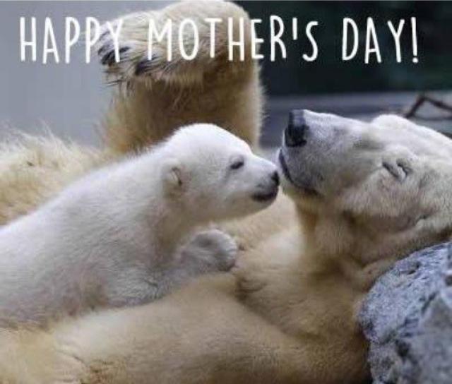 Feliz dia das femeas que te pariram :) - meme