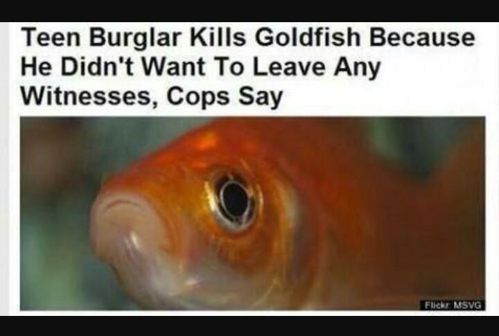 Goldfish... - meme