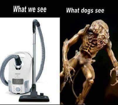 Dog's worst enemy - meme