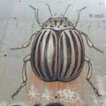 Graffiti realista #2