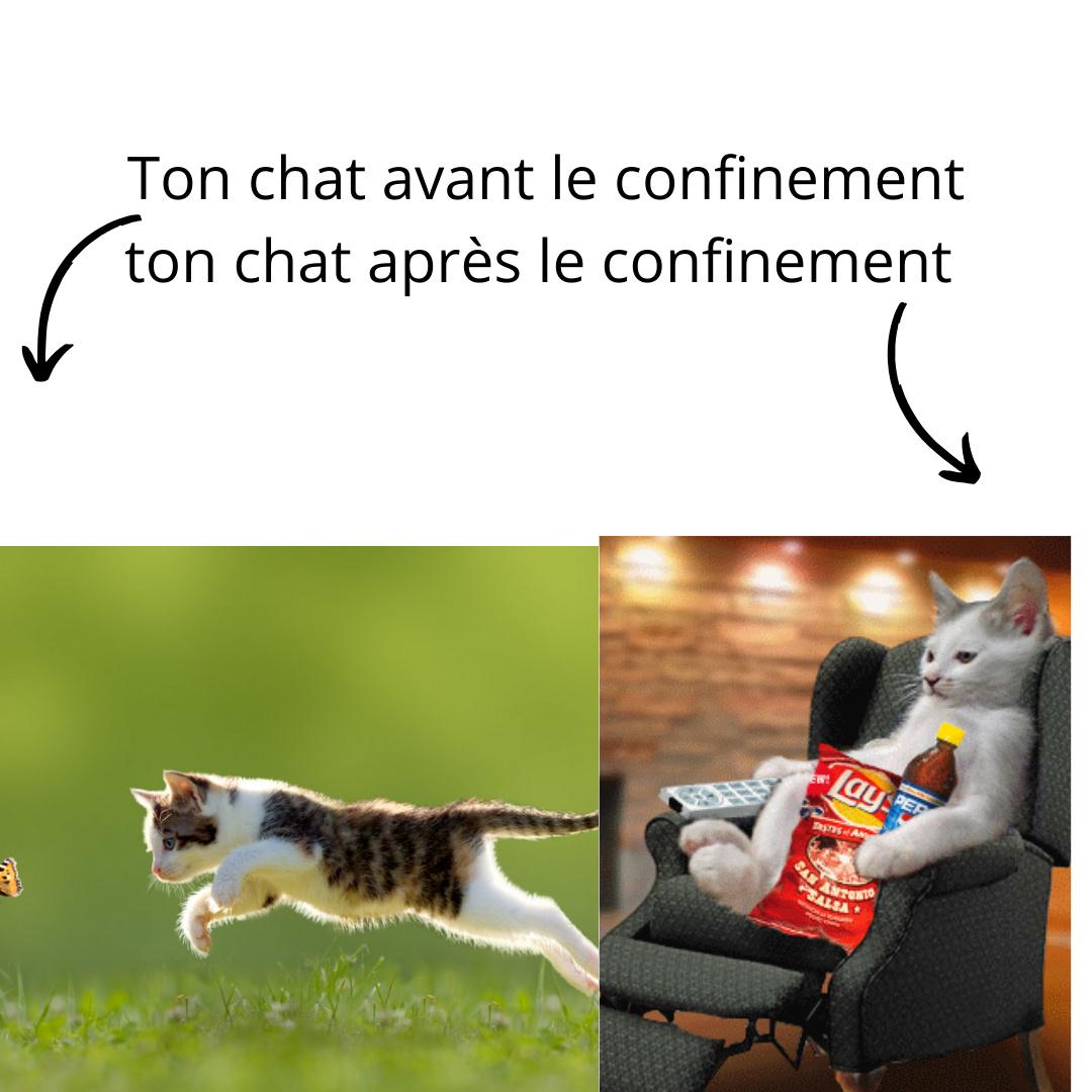 Pauvre chat - meme