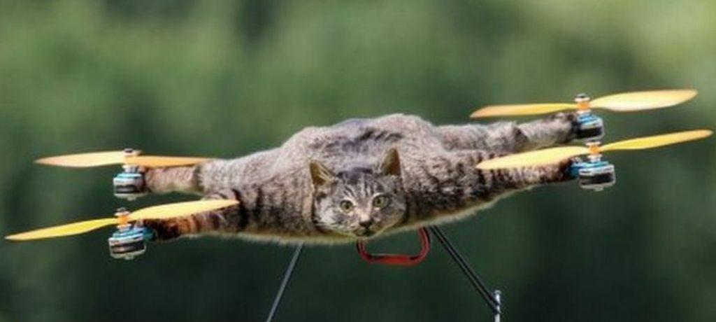No existe el gatodron - meme