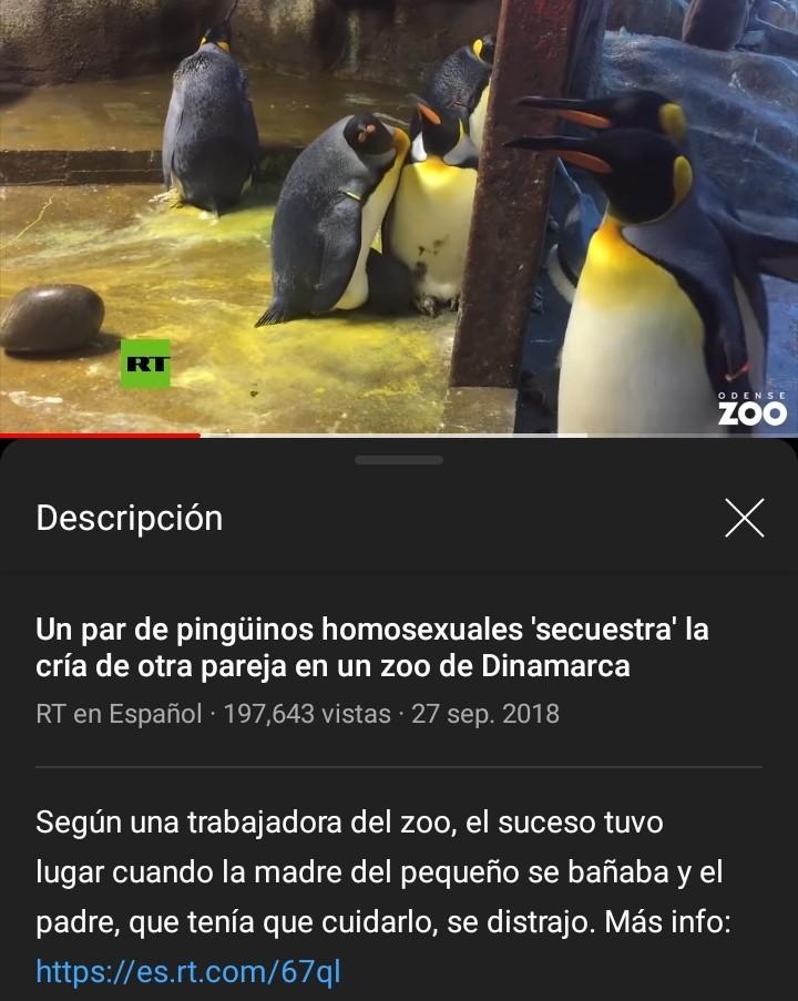 :'( pinches pingüinos, se pasaron de lo que les gusta - meme