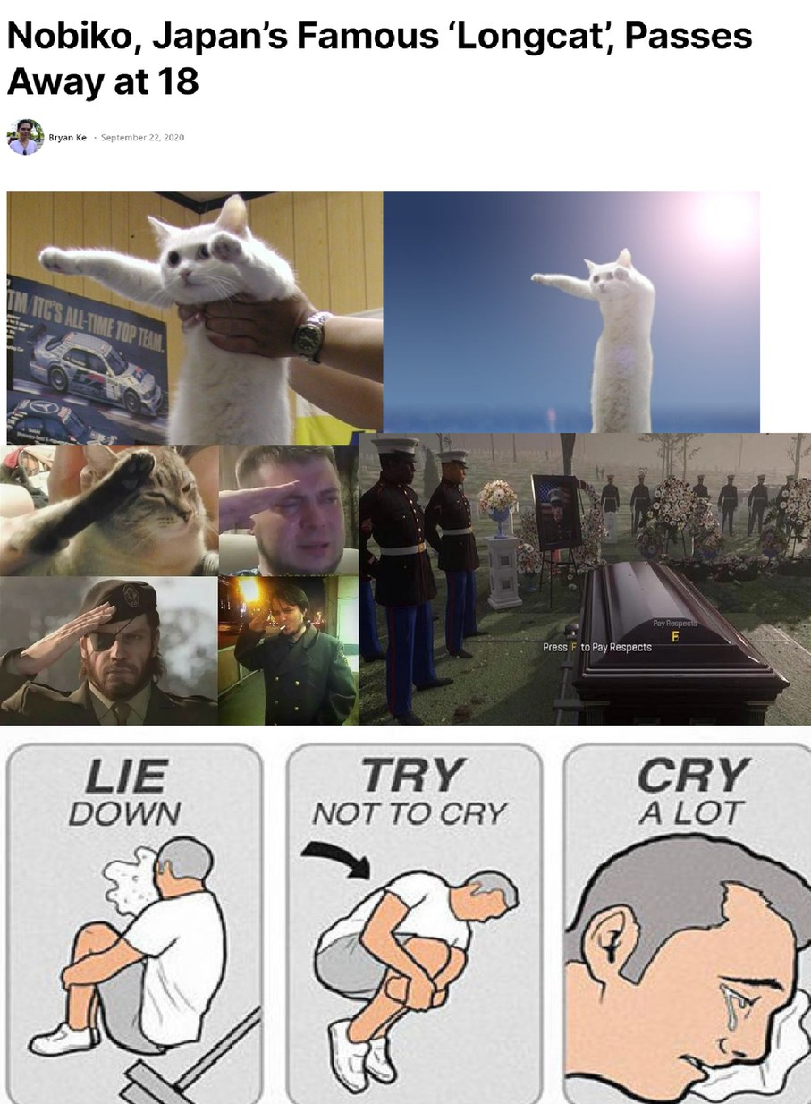 I'm not sure when longcat died but um i found this when i looked longcat up on google RIP *salute* - meme