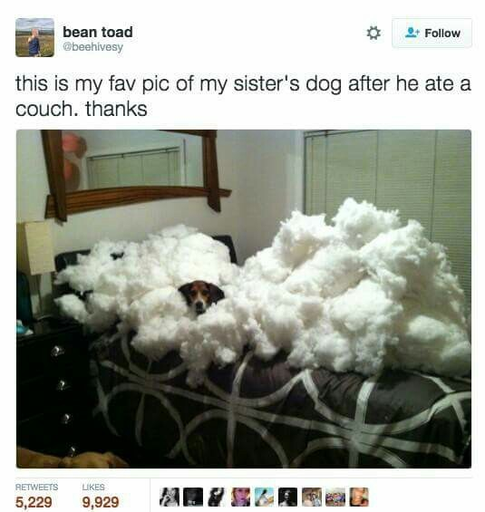 That's a lot of stuffing for a little dogge - meme