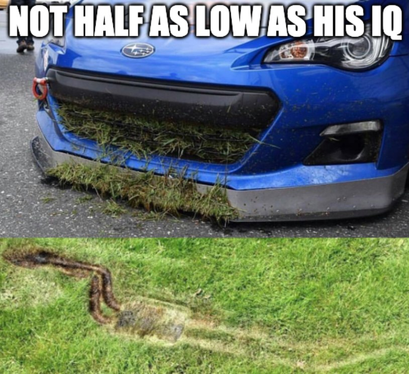 Scraping a leaf this morning - meme