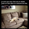 Que tous les chats de mmd se manifestent !