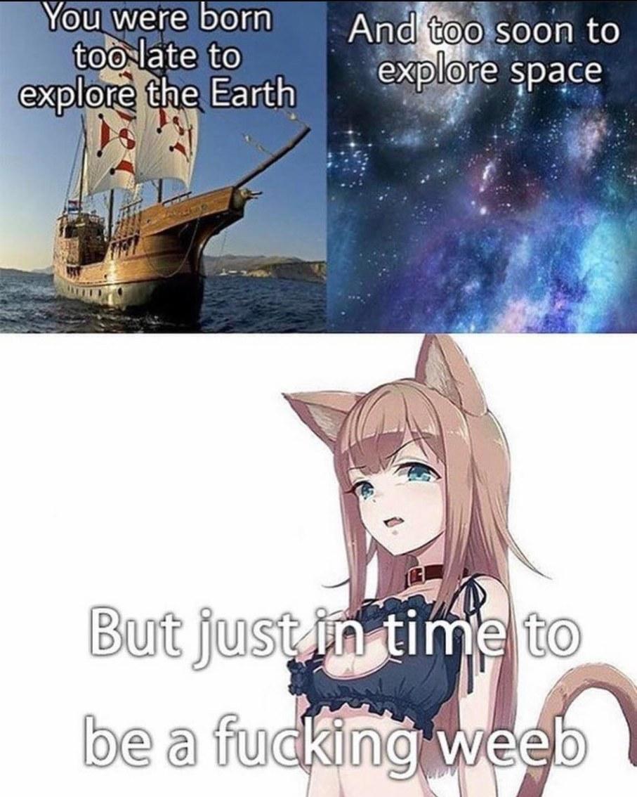 catgirlcare.org - meme