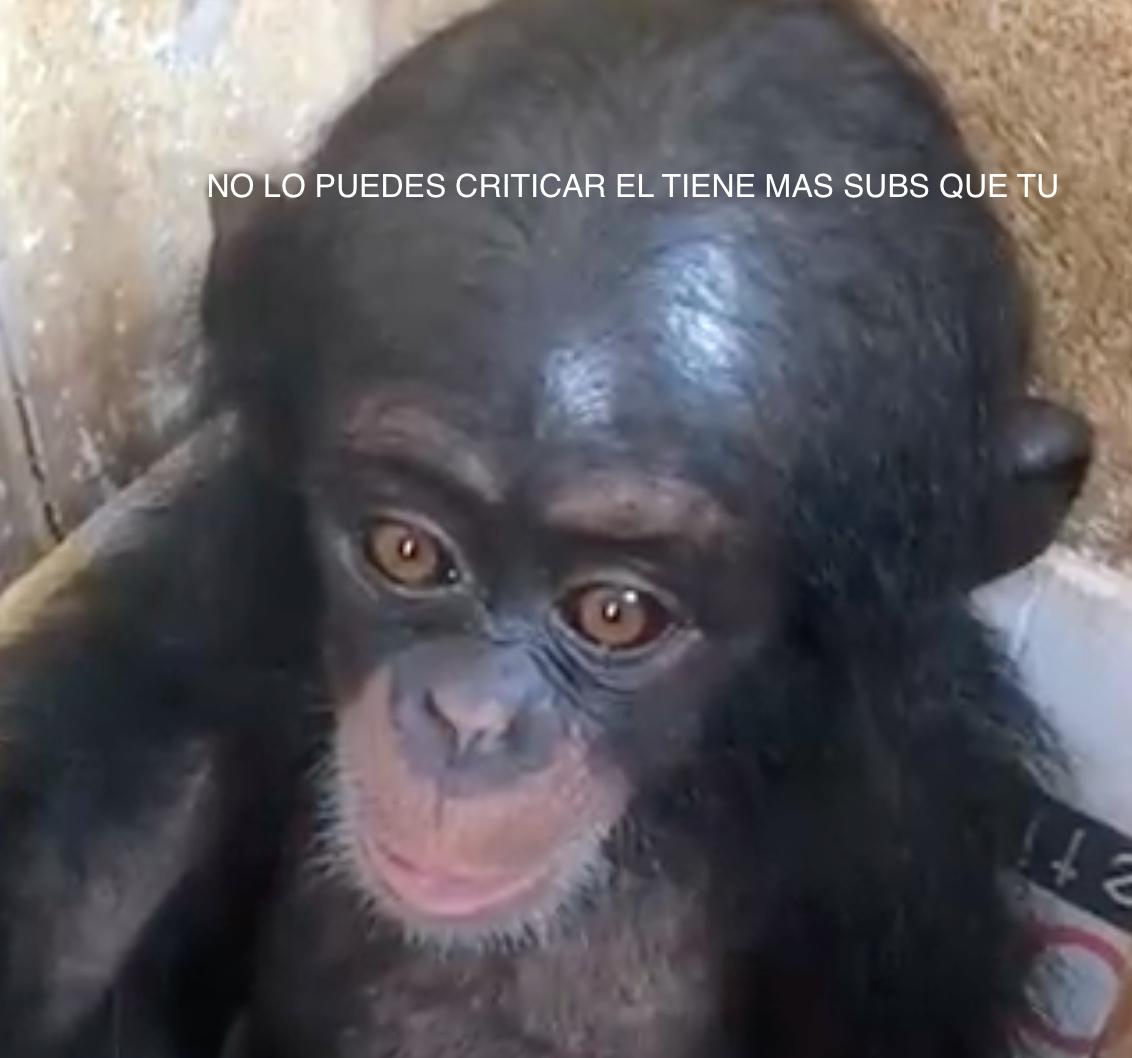 NO LO P[UEDES CRITICAR EL TIENE MAS SUBS QUE TU - meme