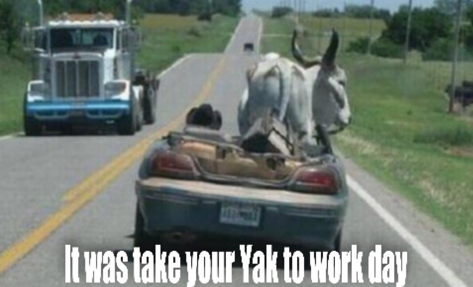 At least I think it's a Yak. - meme