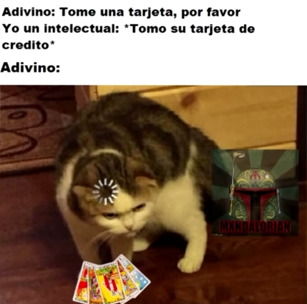 Gato :3 - meme