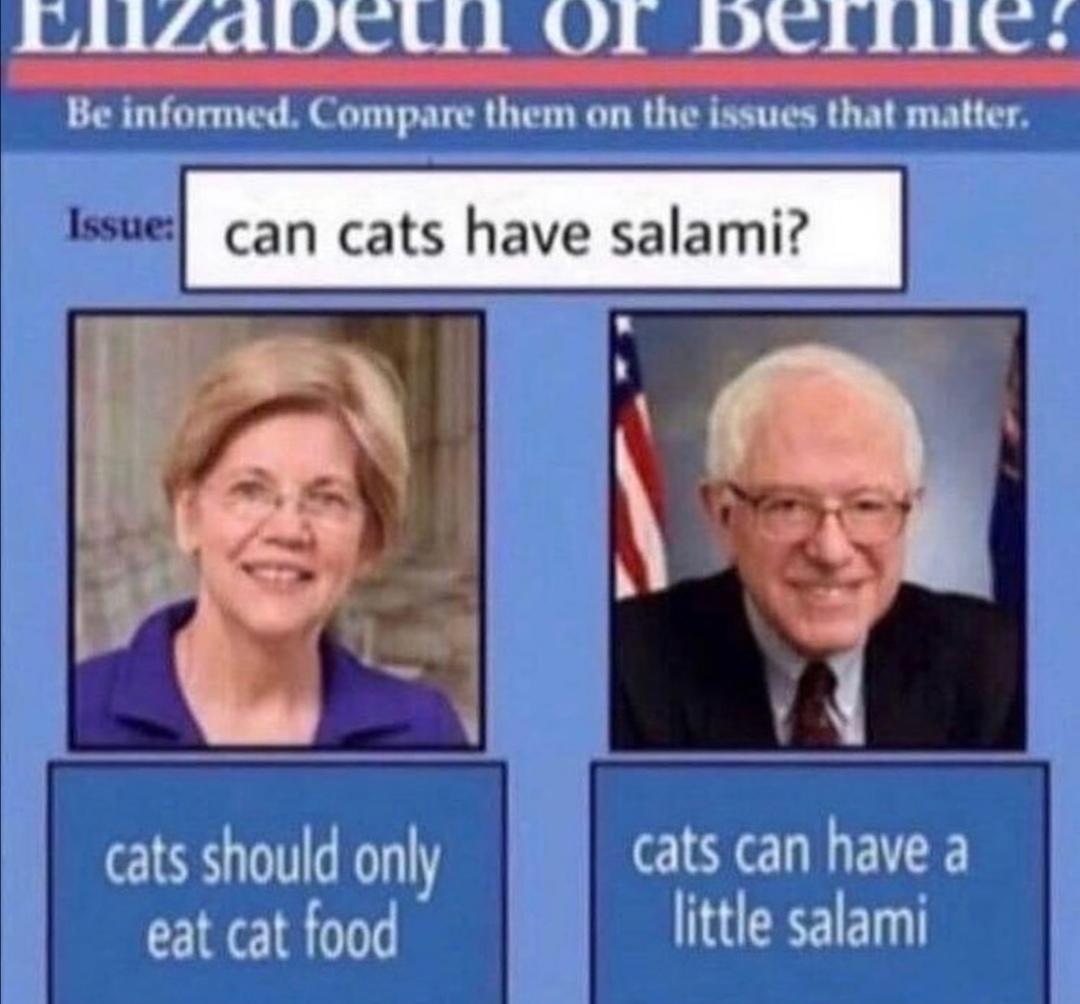 cattt - meme